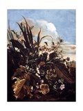 Herbs, Insects and Flowers Giclee Print by Matthias Withoos