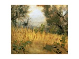Ripe Wheat Giclee Print by Michele Gordigiani