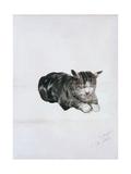 Study of Cat Giclee Print by Giuseppe De Nittis