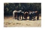 Horses in Sun, Circa 1880 Giclee Print by Giovanni Fattori