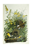 Meadow Lark, 1832 Giclee Print by John James Audubon