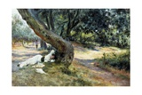 Shade in Olive Grove Giclee Print by Francesco Vinea