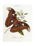 Lepidoptera: Phaloena Atlas, 1798-1799 Giclee Print by Edward Donovan