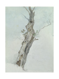 Tree Study, C.1800-05 Giclee Print by Robert Hills