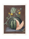 Silver Rock Melon, 1812 Giclee Print by George Brookshaw