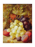 Grapes and Plums Giclee Print by Vincent Clare