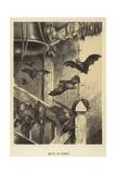 Bats at Home Giclée-tryk
