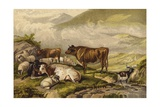 Cattle Giclee Print by Thomas Sidney Cooper