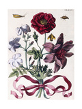 Various European Insects and Flowers Giclee Print by Maria Sibylla Graff Merian