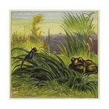 Frog and Fly Giclee Print by Ernest Henry Griset