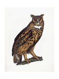 Great Eared Owl, 1841 Giclee Print by Prideaux John Selby