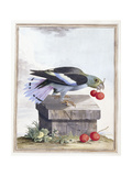 Plate VIII Giclee Print by Peter Brown