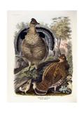 Ruffed Grouse, 1865 Giclee Print by Daniel Girard Elliot