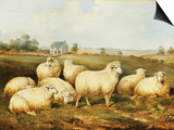 Sheep in a Meadow Pósters por James Charles Morris