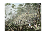 Felling of a Forest, Brazil Giclee Print by Johann Moritz Rugendas