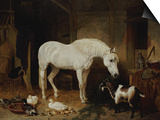 Stable Companions Posters by John Frederick Herring I