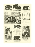 Page from the Pictorial Museum of Animated Nature Giclee Print