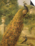 Peacocks in the Park, 1886 Prints by Olaf August Hermansen