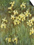 Yellow Irises Posters av Claude Monet