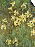 Yellow Irises Prints by Claude Monet