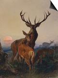 A Stag with Deer in a Wooded Landscape at Sunset Prints by Carl Friedrich Deiker