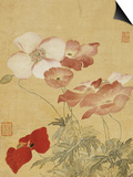 Poppies Prints by Yun Shouping