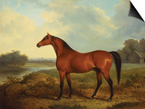 A Bay Stallion in a River Landscape Prints by James Barenger