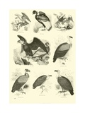 Page from the Pictorial Museum of Animated Nature Reproduction procédé giclée