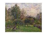 Apple Trees and Poplars in the Setting Sun, 1901 Reproduction procédé giclée par Camille Pissarro