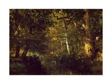 Creek In Forest Giclee Print by Constant Troyon