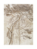 Study of Trees Giclee Print by James Ward