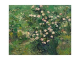 Roses, 1889 Giclee Print by Vincent van Gogh