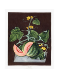 Pumpkin, 1812 Giclee Print by George Brookshaw