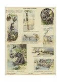Funny Pictures from Africa Giclee Print