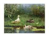 Ducks on a Riverbank Impression giclée par David Adolph Constant Artz