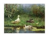 David Adolph Constant Artz - Ducks on a Riverbank Digitálně vytištěná reprodukce