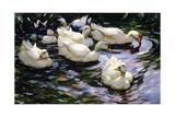 Ducks Swimming in a Sunlit Lake Reproduction procédé giclée par Alexander Koester