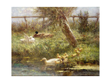Ducks and Ducklings Giclee Print by David Adolph Constant Artz