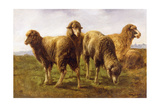 Sheep Grazing in a Meadow Giclee Print by Rosa Bonheur