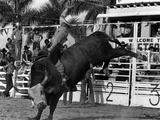 Homestead Rodeo, 1983 Photographic Print