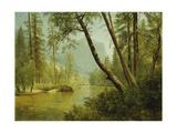 Sunlit Forest Giclee Print by Albert Bierstadt