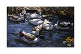 Ducks in the Reeds under the Boughs Giclee Print by Alexander Koester