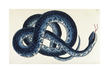 Southern Water Snake Giclee Print by Frederick Polydor Nodder