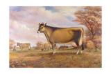 Jersey Cow Giclee Print by Dudley Pout