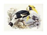 Dichocerus Bicornis, 1876-1882 Giclee Print by Johan Gerard Keulemans