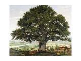 La Plaine D'Annecy-Chene Le Veterant Des Alpes Giclee Print by Jean Jacques Rousseau