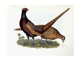 Pheasants Giclee Print by Prideaux John Selby