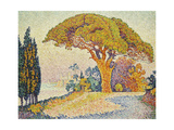 Pine Trees at Bertaud, Saint- Tropez Gicléetryck av Paul Signac