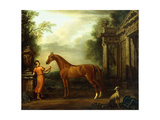 The Chestnut Arabian of Hampton Court, C.1726 Giclee Print by John Wootton