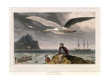 Albatross, Pub. London 1810 Giclee Print by Thomas & William Daniell
